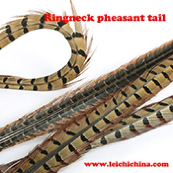 Ringneck pheasant tail