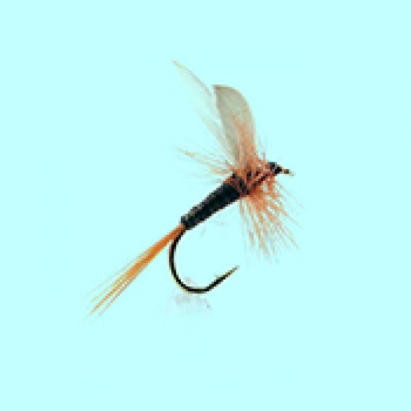 Dry fly Ginger Quill