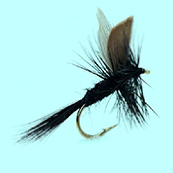 Dry fly Black Gnat
